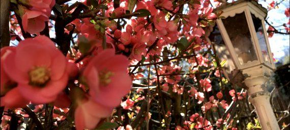 Der Frühling grüßt…